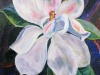 126-Gummibaumblüte-3-(Ueli-Herren)
