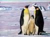 Pinguinenfamilie 7.11.15 003#003