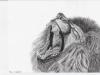 Brüllender Löwe von Remo Brunschwiler