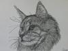 Katze von Remo Brunschwiler 01 A4