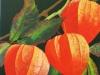 Drei Lampionsblumen Werner Rutz40x50 003